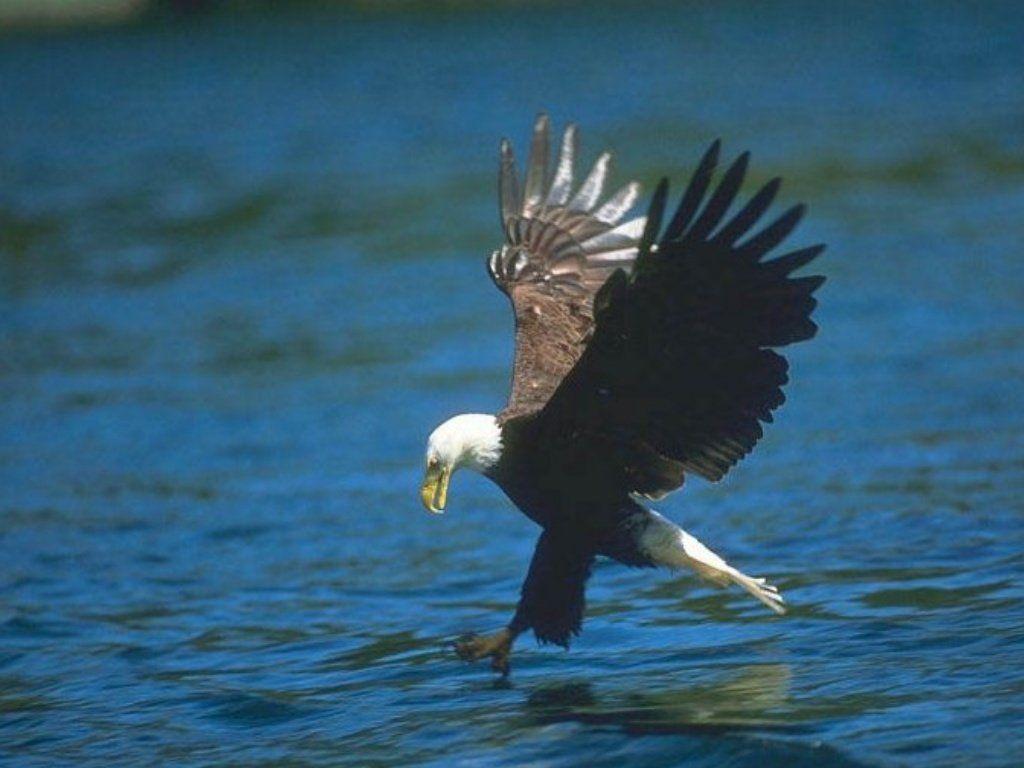 Aigles royaux Perturbation - Site de reseau-aigles